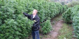 Las marihuany pod Toruniem. FILM
