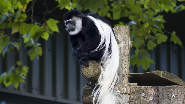 Zwierzęta z nowojorskiego zoo
