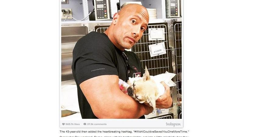 Dwayne Johnson loses puppy to food poisoning