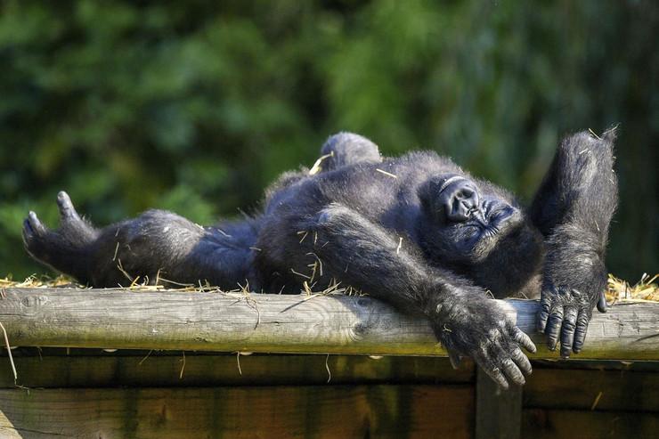 Bristol Zoo vrt
