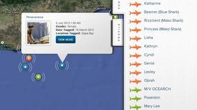 Sprawdź, gdzie jest rekin