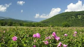 Dolina Róż w Bułgarii