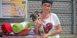 Podaruj kocyk zwierzakowi