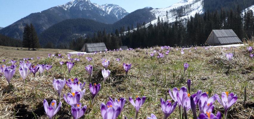 Skandaliczne zachowanie turystów w Tatrach. Apele TPN nie pomogły