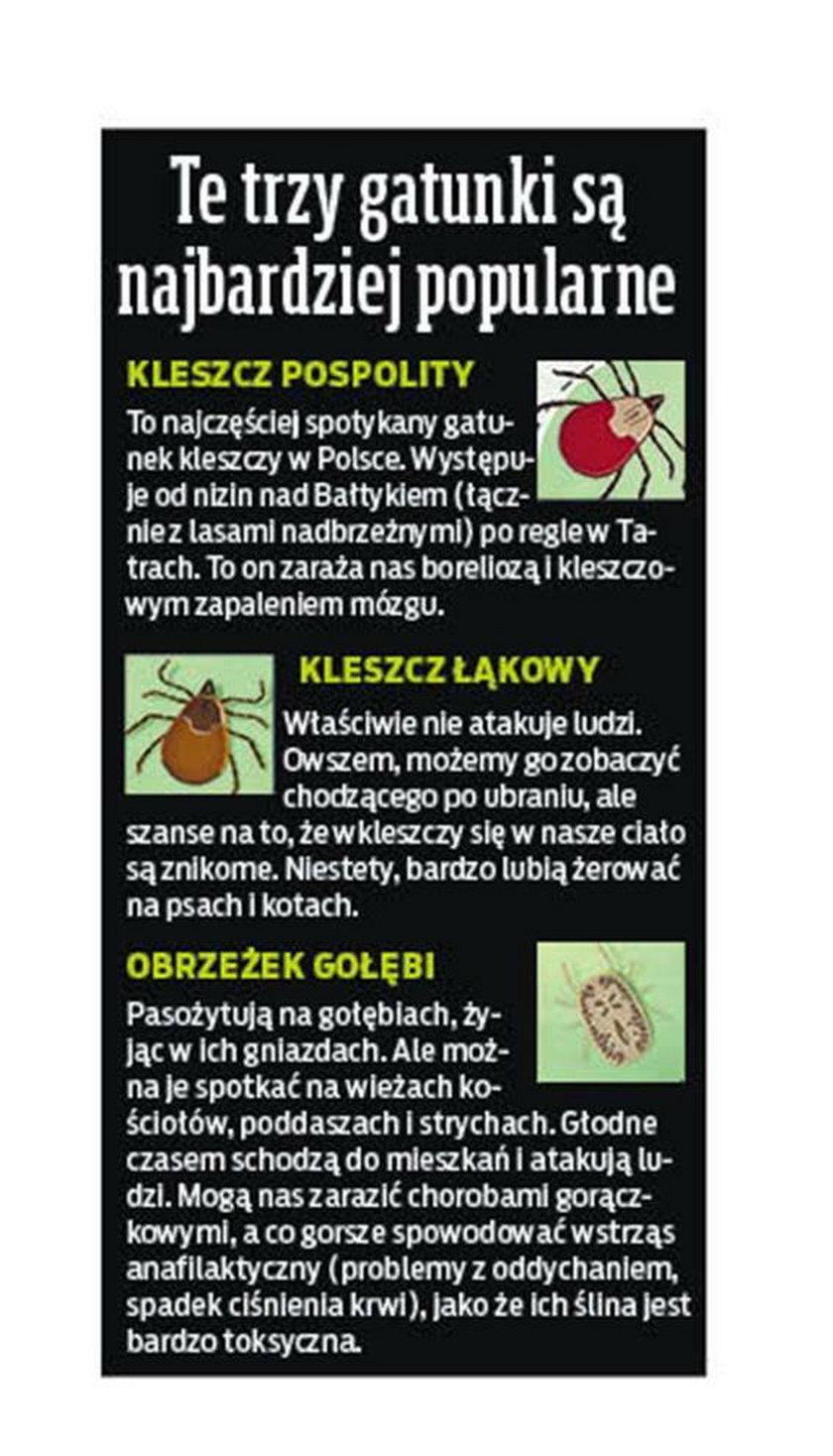 W Polsce żyje 19 gatunków kleszczy, ale to te trzy są najbardziej popularne