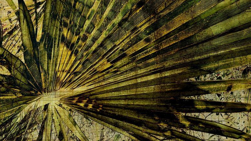 Biblioteka Liści Palmowych - tajemnica twojego przeznaczenia