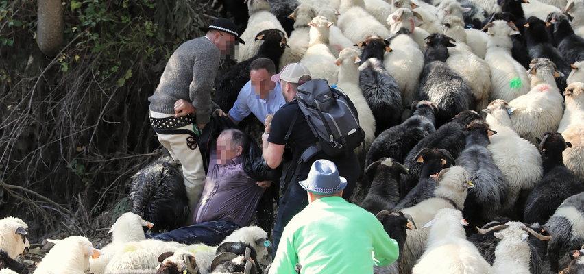 Mężczyzna stratowany przez owce wpadł do potoku. Ludzie ruszyli mu z pomocą