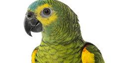 Strażak uratował papugę, a ta kazała mu spier...!