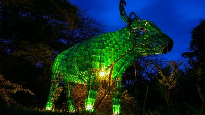 A ray of hope? Meet the Buffalo made of over 2000 recycled beer glass unveiled in Nairobi to mark St Patrick's Day amidst coronavirus scare