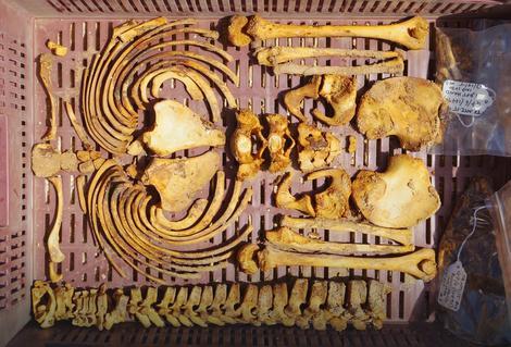 Found skeletons reveal the dark secrets of building Amarne