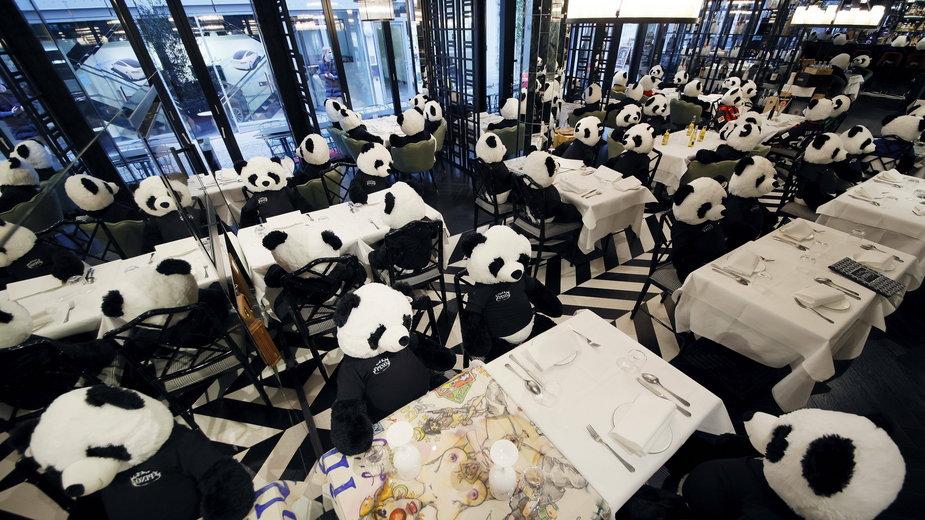 """Frankfurt: pluszowe pandy """"gośćmi"""" restauracji"""