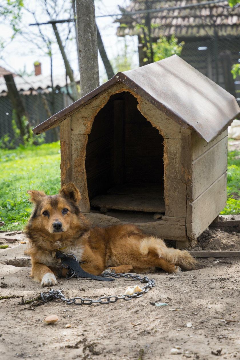 Niedopuszczalne jest też pozostawienie w upale psa na uwięzi