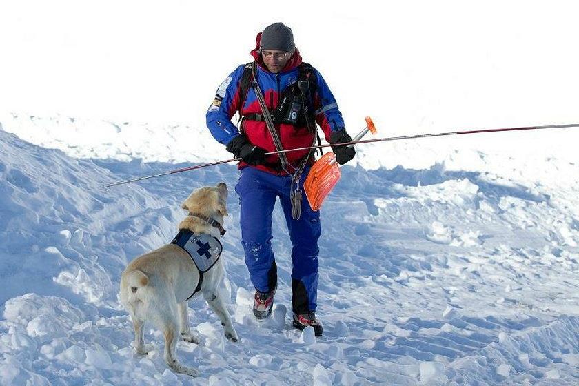 Psy najczęściej są własnością ratowników zawodowych, ale też ochotników.