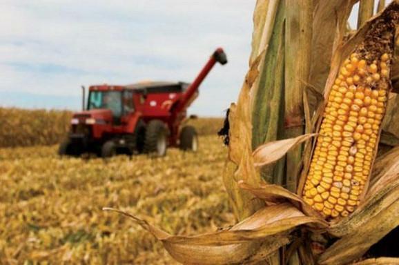 Srbija će izvoziti i kukuruz u Kinu