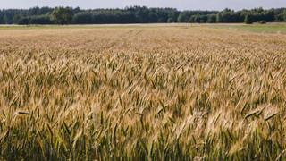 Polski Ład dla rolnictwa: Zmiany na polskiej wsi