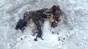 Alpejskie lodowce odsłaniają ciała żołnierzy poległych podczas I wojny światowej