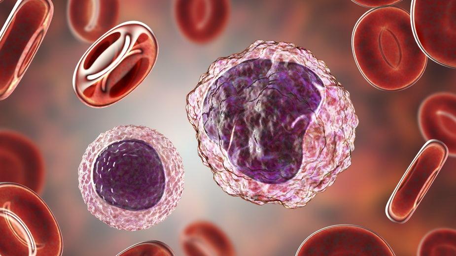 Podwyższone monocyty w ciąży. Czy to powód do niepokoju?