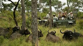 Kłusownicy korzystają z geotagów na zdjęciach turystów z safari, by polować na zagrożone wyginięciem zwierzęta