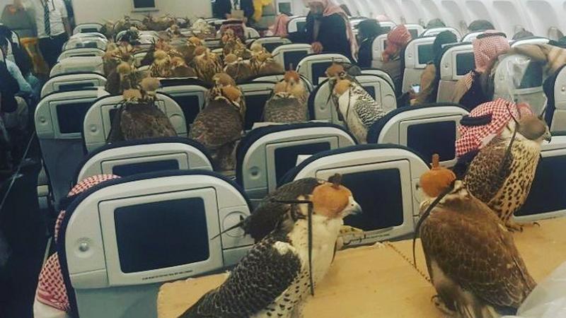 80 sokołów w samolocie. Każdy miał paszport i bilet