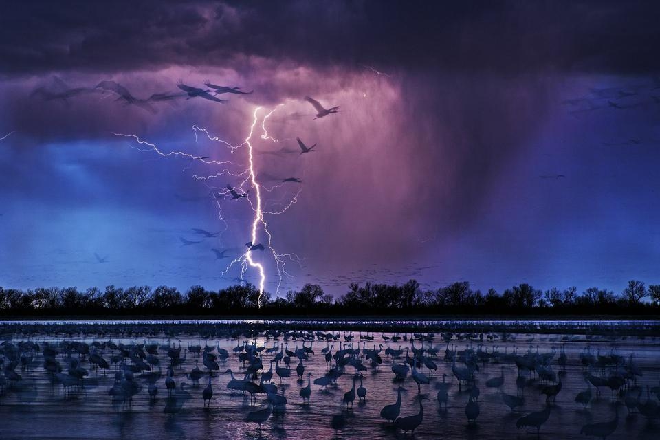 """Nagroda główna: """"Żuraw kanadyjski"""", fot. Randy Olson"""