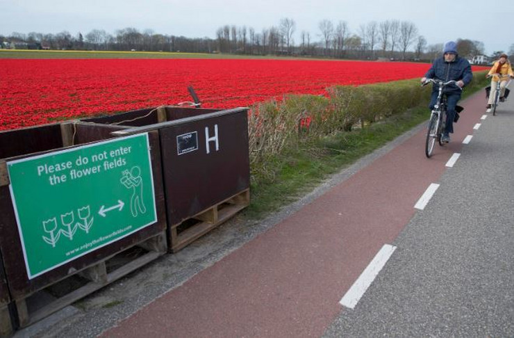 Holandija lale AP
