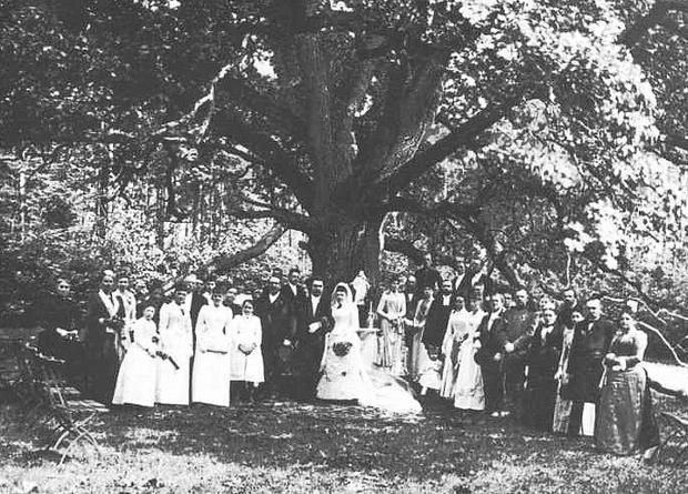 Wesele pod dębem, rok 1900