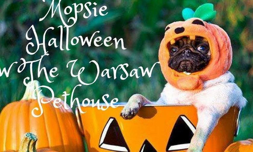 Mopsie Halloween w The Warsaw Pethouse!