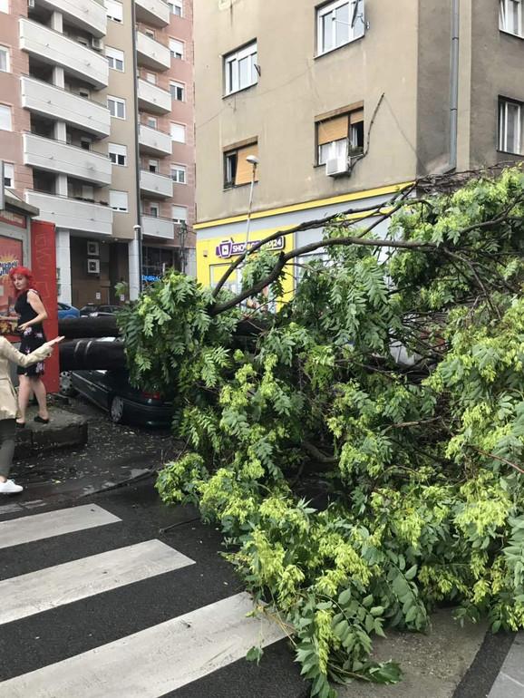Nevreme je oborilo i drvo u Ruzveltovoj ulici