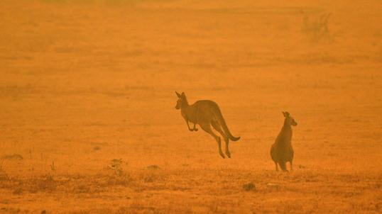 Znalezione obrazy dla zapytania australia pożary