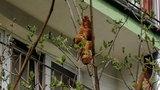 Mieszkańcy Krakowa przerażeni. Na drzewie widzieli egzotyczne zwierzę. Prawda była zupełnie inna