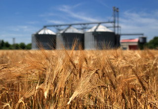 Nieurodzaj uzasadnia zmniejszenie dostaw. UOKiK bada rynek rolny