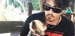 Pieski Deppa dostały śmiertelne ultimatum