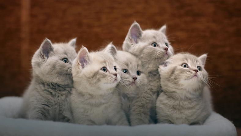 Kot jakiej rasy będzie najlepiej pasował do Ciebie?