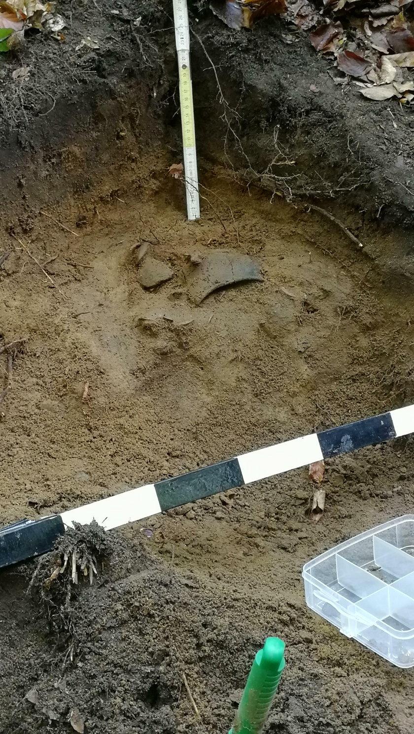 Poszedł na grzyby i znalazł średniowieczny skarb!