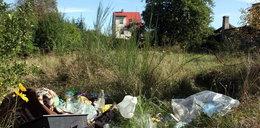 Urzędnicy z Gdyni nie posprzątali nawet w święto
