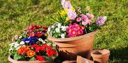 Te rośliny już możesz sadzić na balkonie!