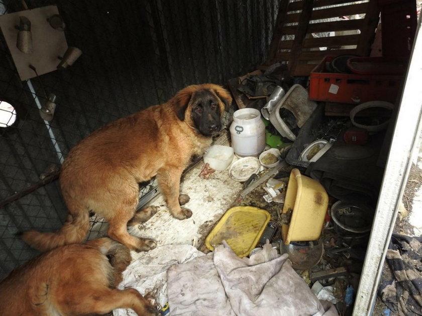 Zabity pies i mięso niewiadomego pochodzenia w chińskim barze