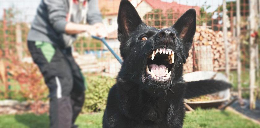 Straszny atak psa na 6-latka. Bestia odgryzła mu ucho