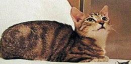 Kot Florek zaginął na Grunwaldzie