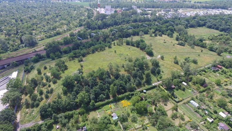 Mieszkańcy wrocławskiego osiedla walczą o zaniedbane Wzgórze Tarnogajskie
