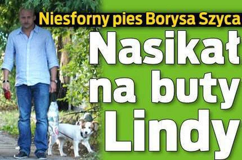 Pies Szyca obsikał Lindę