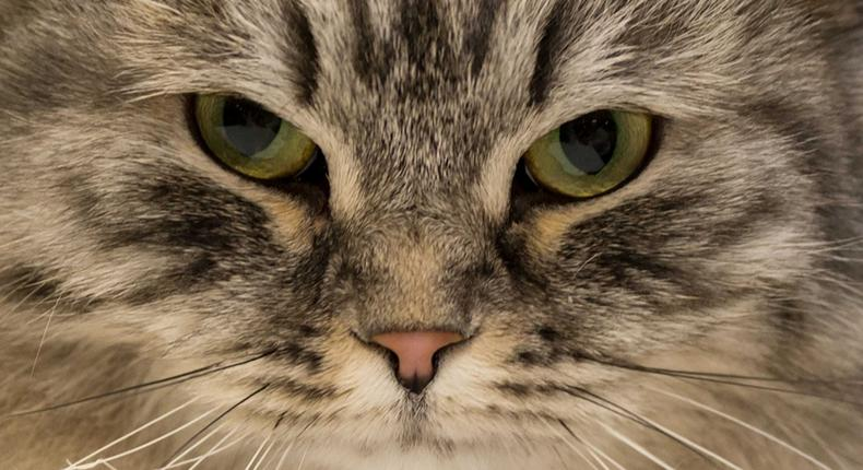 cat (courtesy)