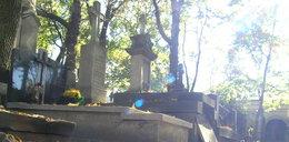 Okradli grobowiec