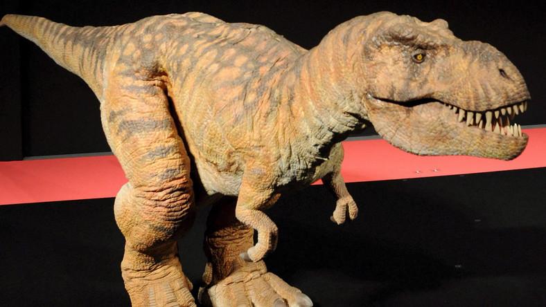 Tyranozaur okazał się padlinożercą