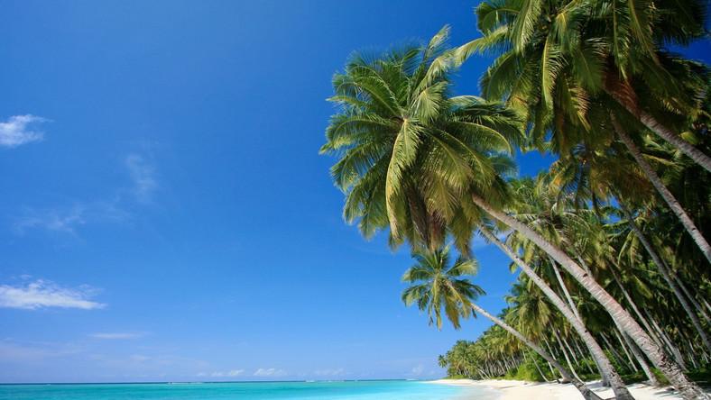 Nauka języka pod palmami