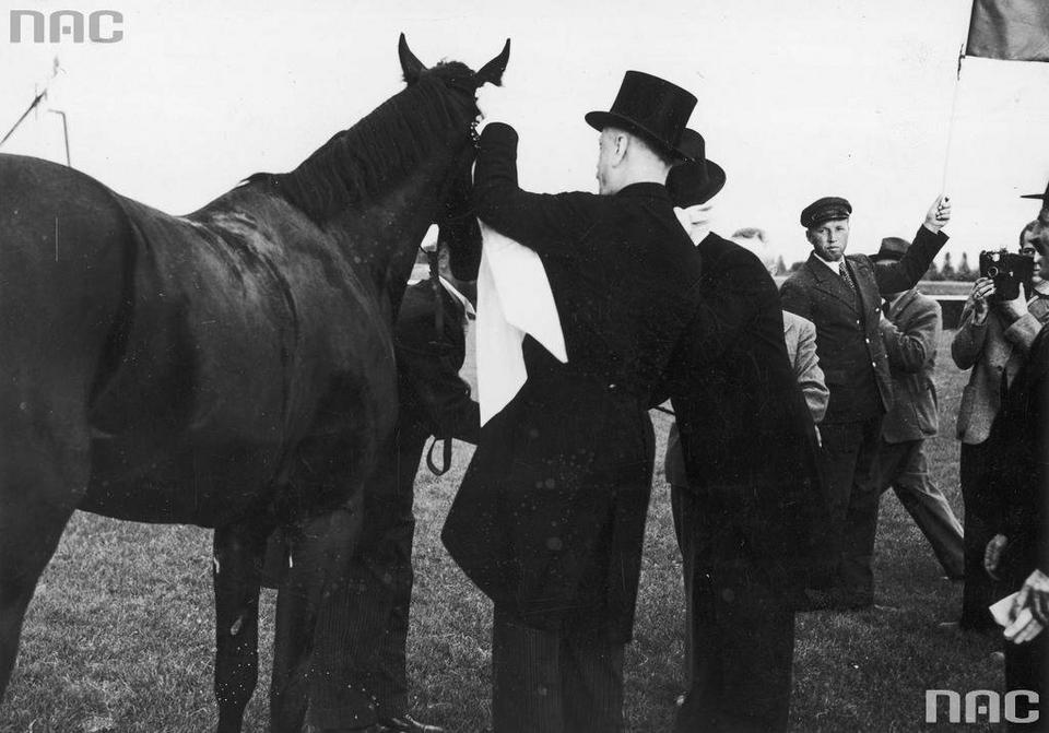 Prezes Towarzystwa Zachęty do Hodowli Koni w Polsce hr. Michał Komorowski dekoruje błękitną wstęgą konia Colt, 1939 r.