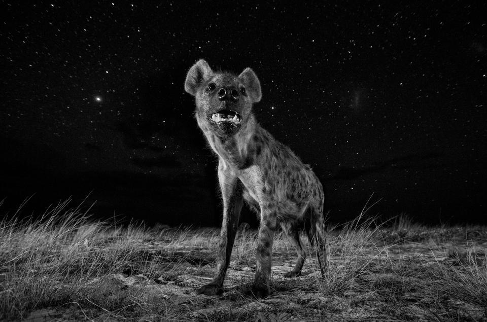 Świat natury: I miejsce — Will Burrard-Lucas, Wielka Brytania