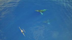 Niesamowite spotkanie z wielorybami