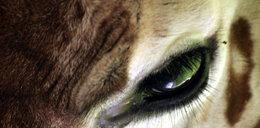 Niesamowite oczy zwierząt? FOTO