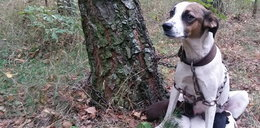 Te psy miały zdechnąć w lesie!